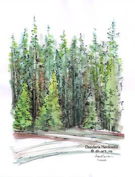 Sketchbook - Fir trees