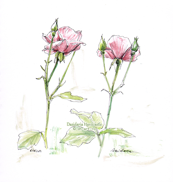 Sketchbook - Two roses by dh6art