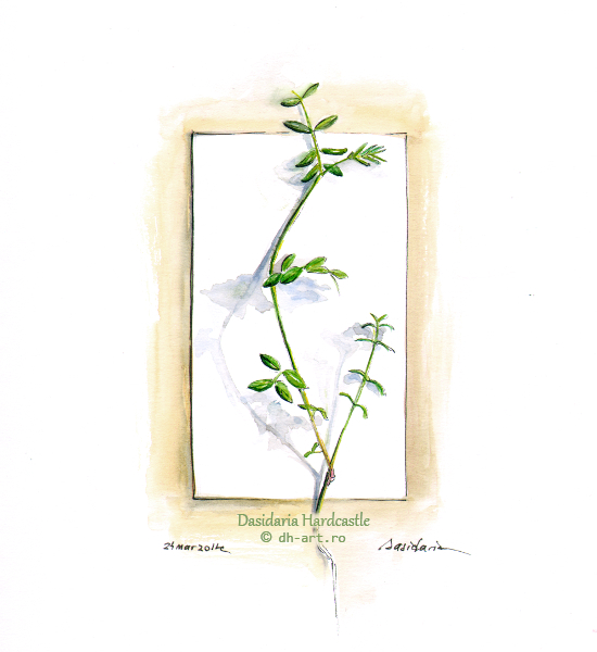 Sketchbook - Plantlet by dasidaria-art