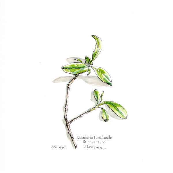 Sketchbook - Spring green by dasidaria-art