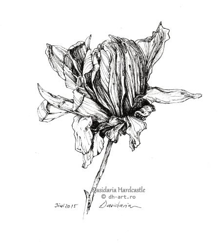 Sketchbook - Fading flower by dasidaria-art