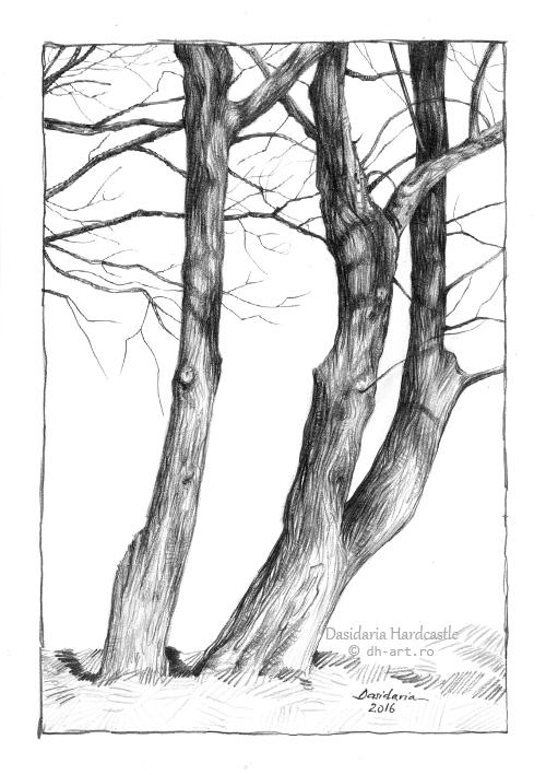 Tree trunks by dasidaria-art