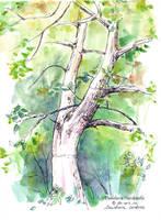 Sketchbook - Backyard tree by dasidaria-art