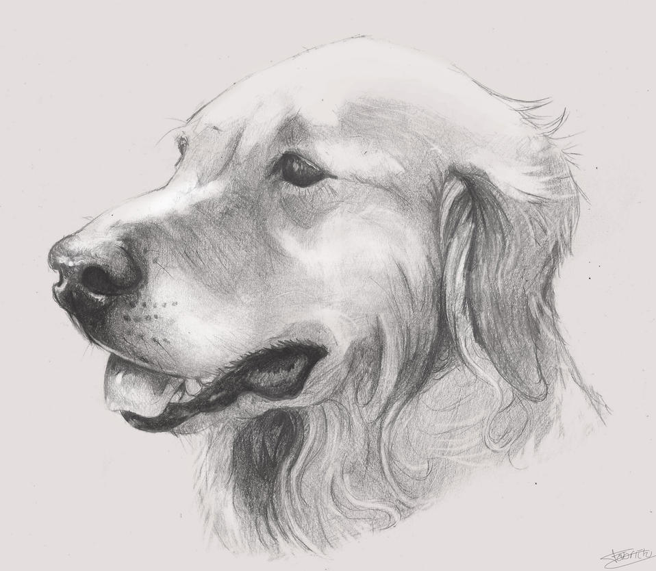 Dog Drawing Images Drawing Dog by Fabriciomarvin