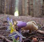 What Next Fairy