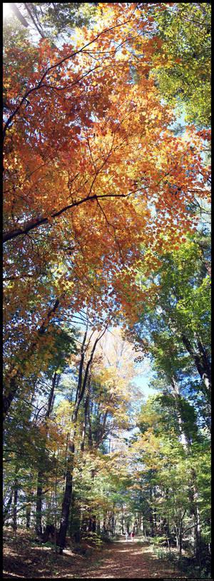 Looming Trees 3