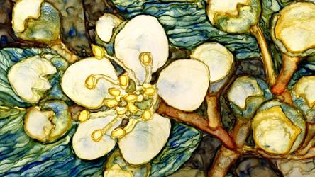 Bluegreen white blossom Detail by TenderlySharp