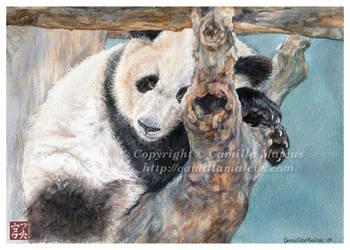 Giant Panda by CamillaMalcus