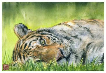 Tiger by CamillaMalcus
