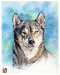 Dog portrait no.1 by CamillaMalcus