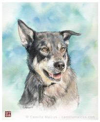 Dog portrait no.2 by CamillaMalcus