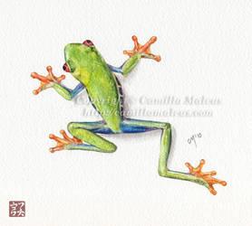 Frog sketch by CamillaMalcus