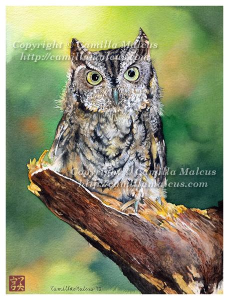 Owl by CamillaMalcus