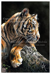The Tigress by CamillaMalcus