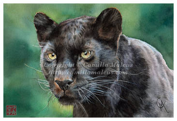 Black Panther by CamillaMalcus