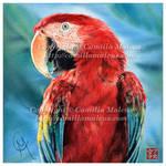 Scarlet Macaw by CamillaMalcus