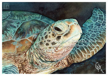 Green Turtle by CamillaMalcus