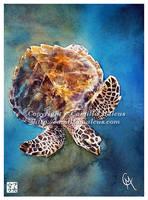 Hawksbill Turtle by CamillaMalcus