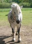Stock 2. Horse