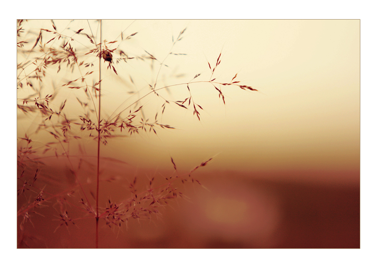 touchofsummer. by noye