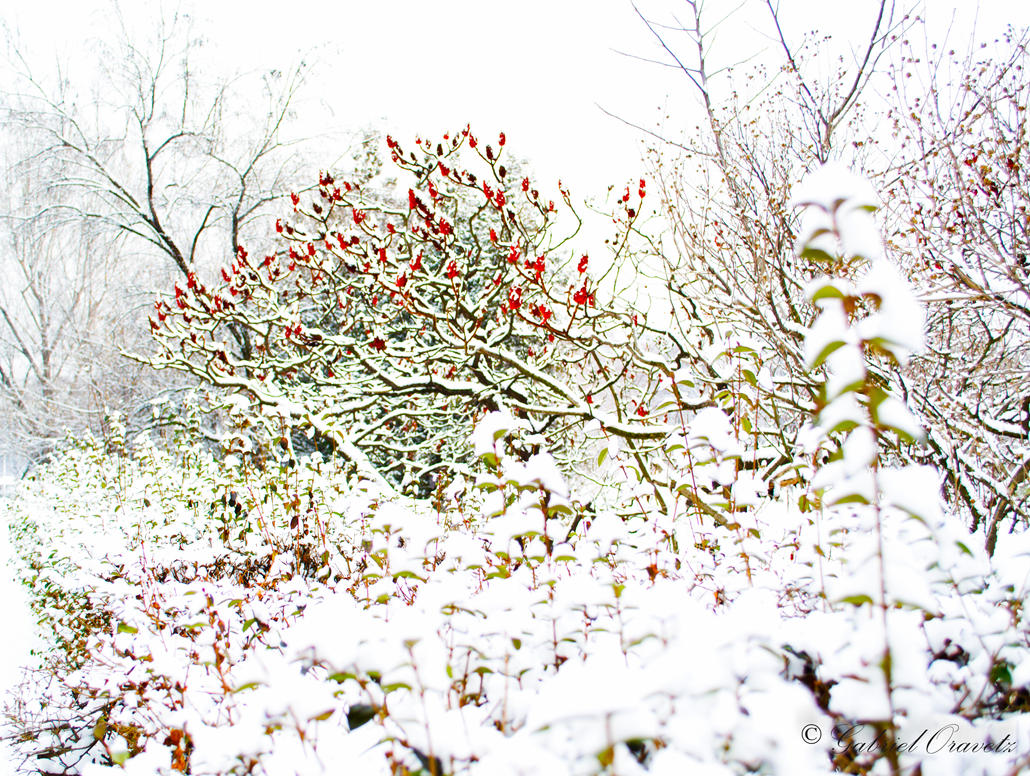 Winter flowers by GabrielOravetz on DeviantArt