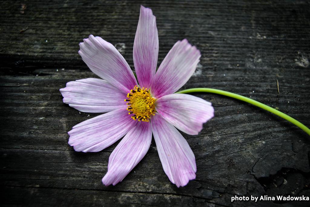 Beauty Purple Flower by LynnsMind