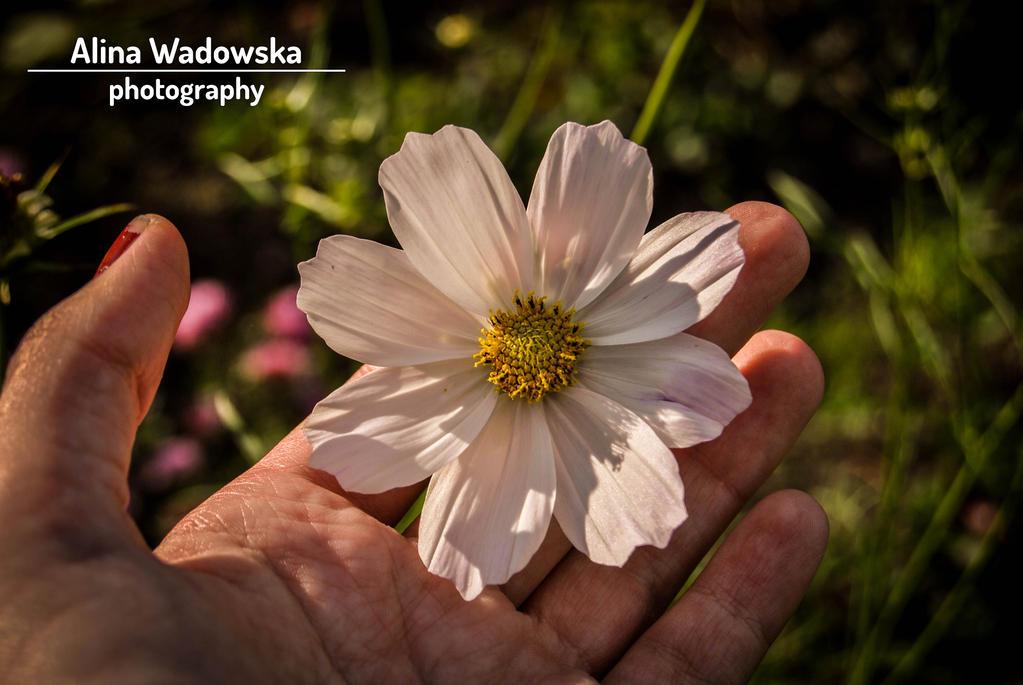 Flower XXI by LynnsMind