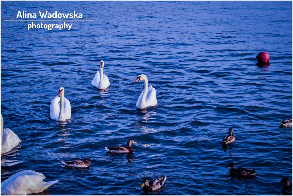 Swans by LynnsMind