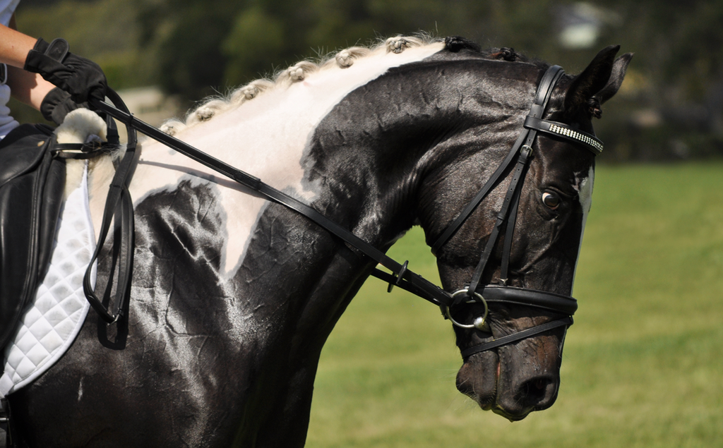 Paint Horse Dressage Stock 1 By Naturalhorses