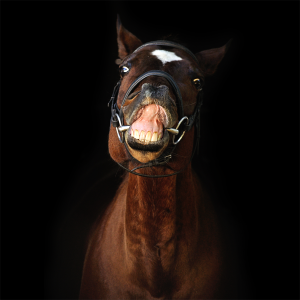 naturalhorses's Profile Picture