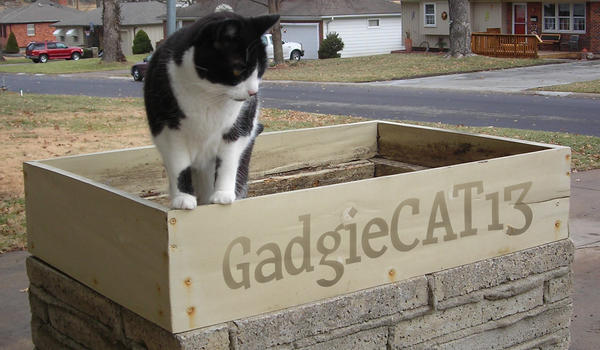 GadgieCAT13's Profile Picture