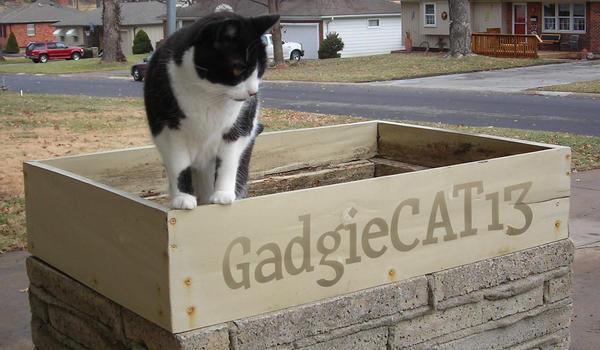 GadgieCAT13's Profile Picture