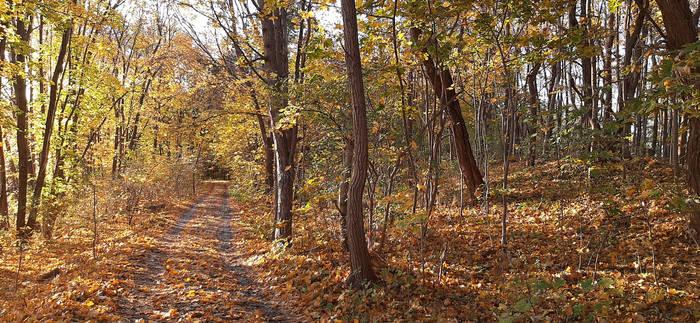 Autumn hideout