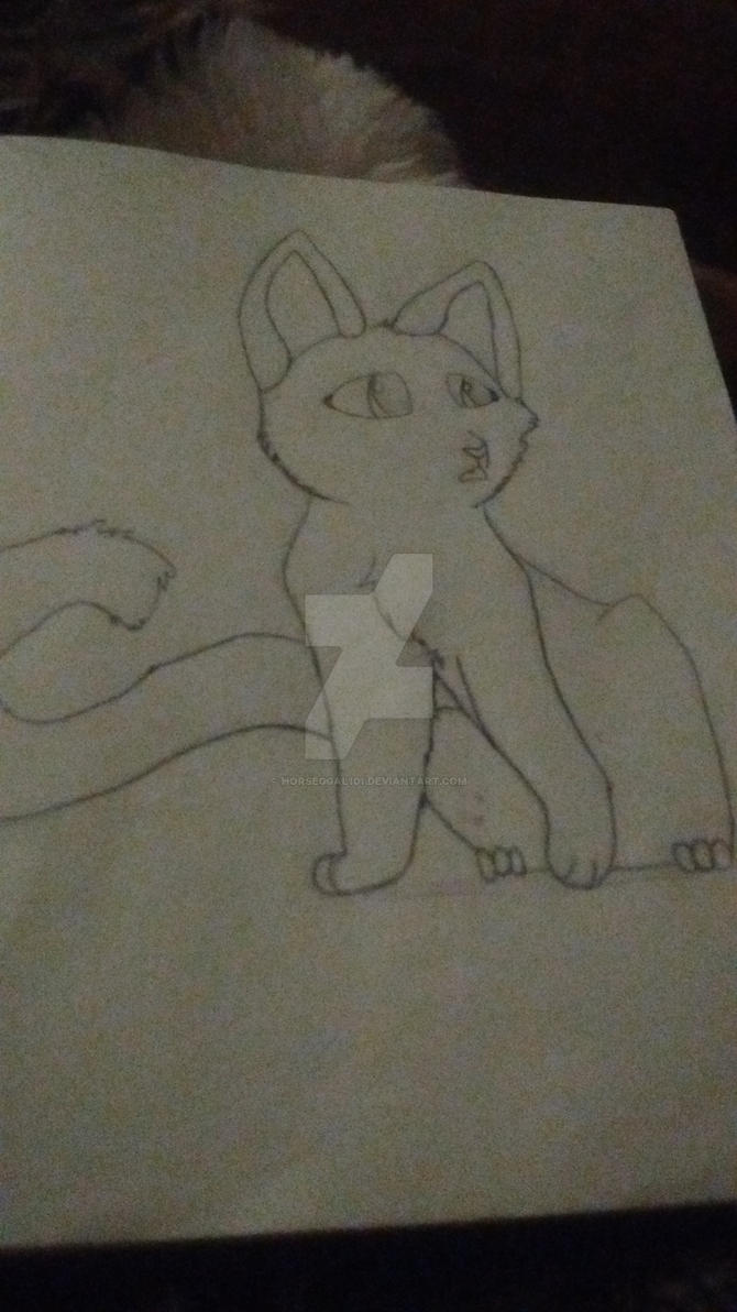I drew a cat by horseggal101