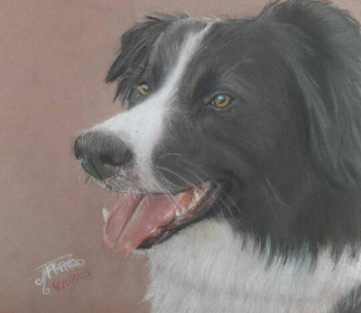 Dog - Border collie - Soft pastel by AltheaWorld