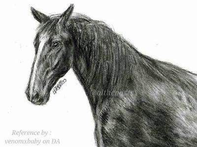 Horse drawing with charcoal pencil by AltheaWorld