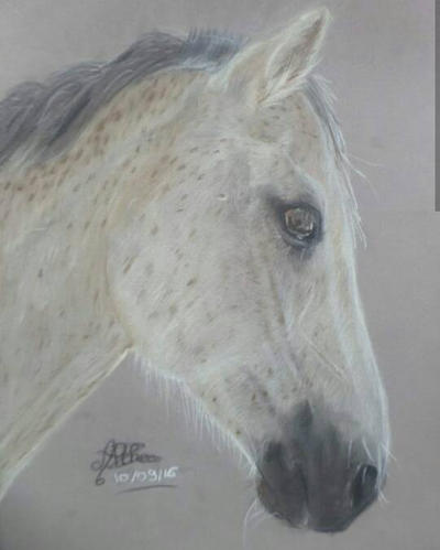 Horse drawing with soft pastel by AltheaWorld