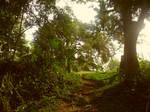 Forest Way by AnnaGabi
