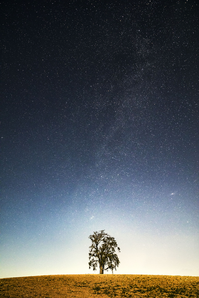 One Tree Hill by fistfulofneurons