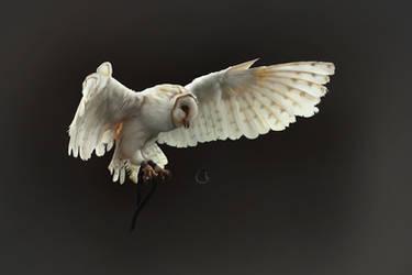 White Owl by Lakmys