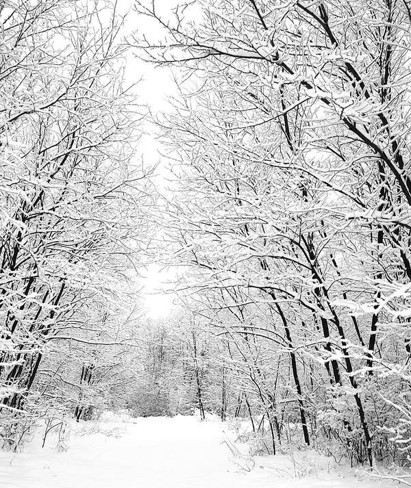 Zimska idila - Page 3 Winter_landscape_by_Menipezz
