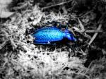 Electric Blue by AtipeAk