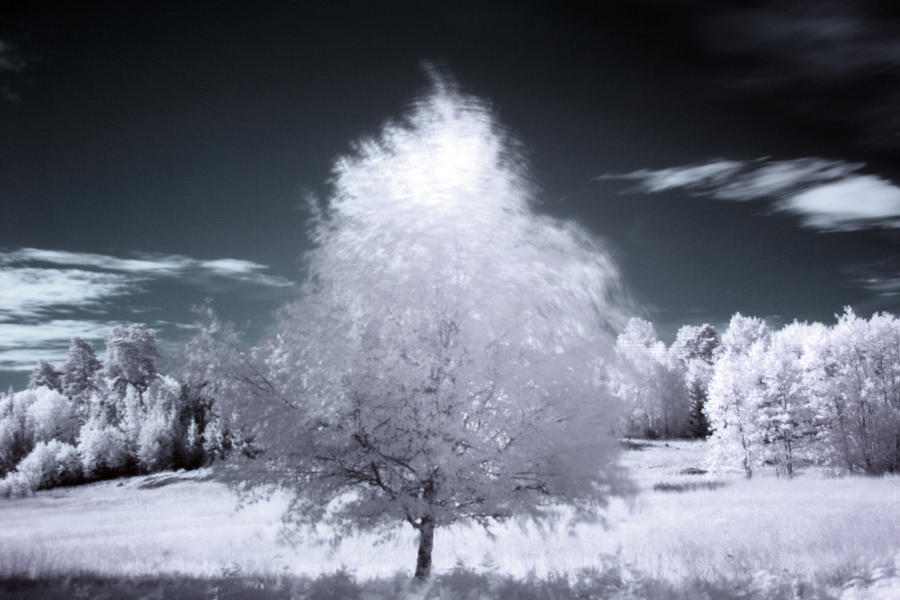 Infrared Tree standing alone by Panoram