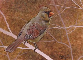female cardinal w.c. by silentsketcher