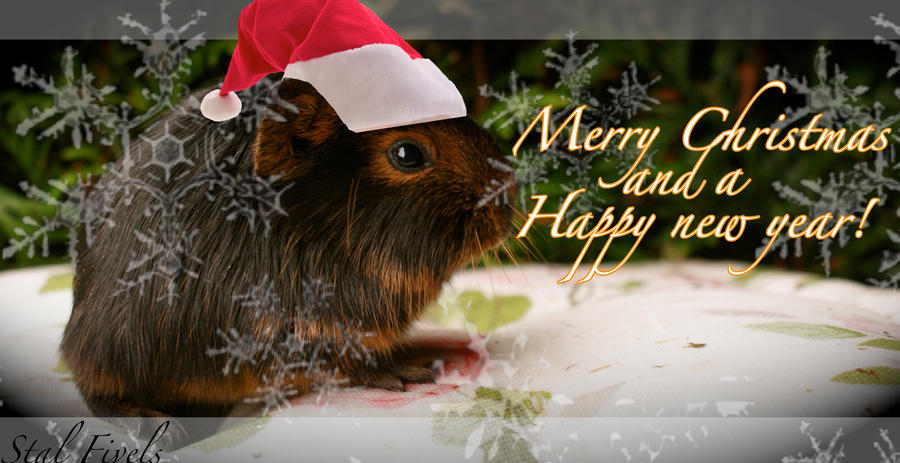 Christmas Guineapig by WolfsbeRoses