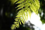 Light in the dark forest by Icemaya