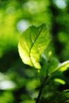 Summer green by Icemaya