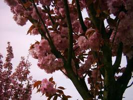 pink tree by dakki000