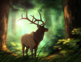 :|: Calling of the Forest :|: by Majorest
