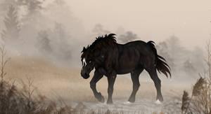 DIRPG | Zander | Calm Waters by Majorest